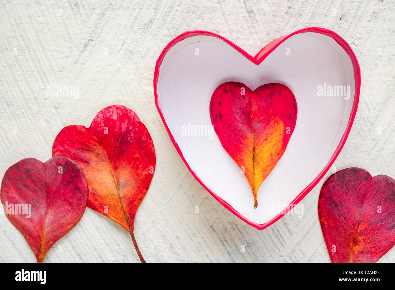 Red heart shaped leaves and bowl - Stock Image