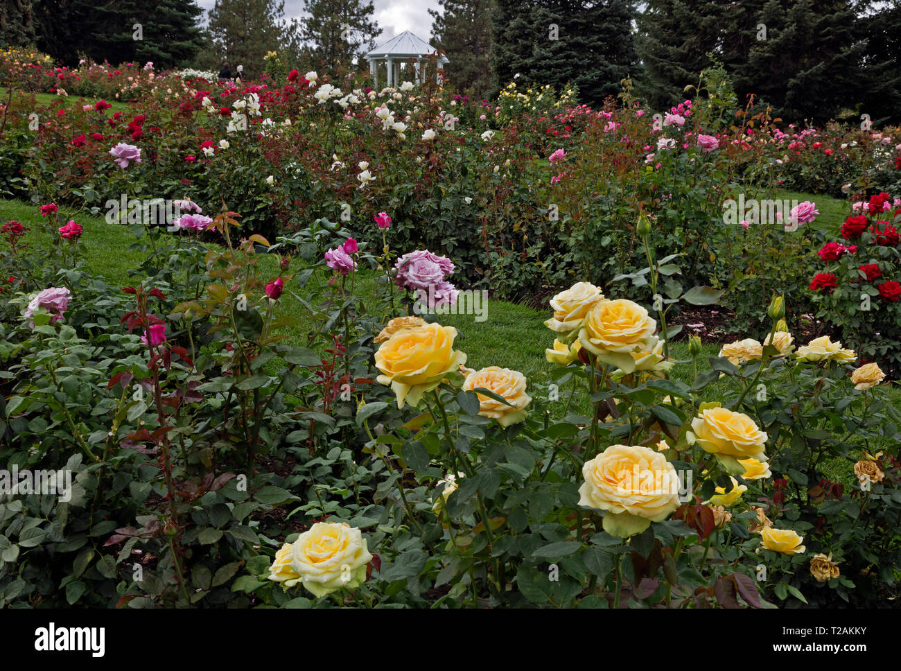 WA16085-00...WASHINGTON - Colorful Rose Garden at Manito Park in Spokane. Stock Photo