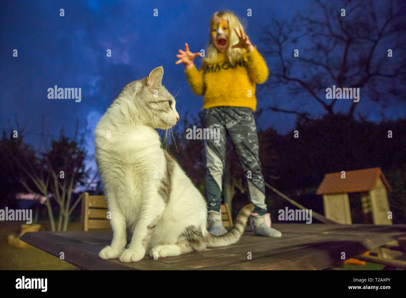 Young girl with tiger makeup mask is trying to scare her cat before going to a Purim party. model released - Stock Image