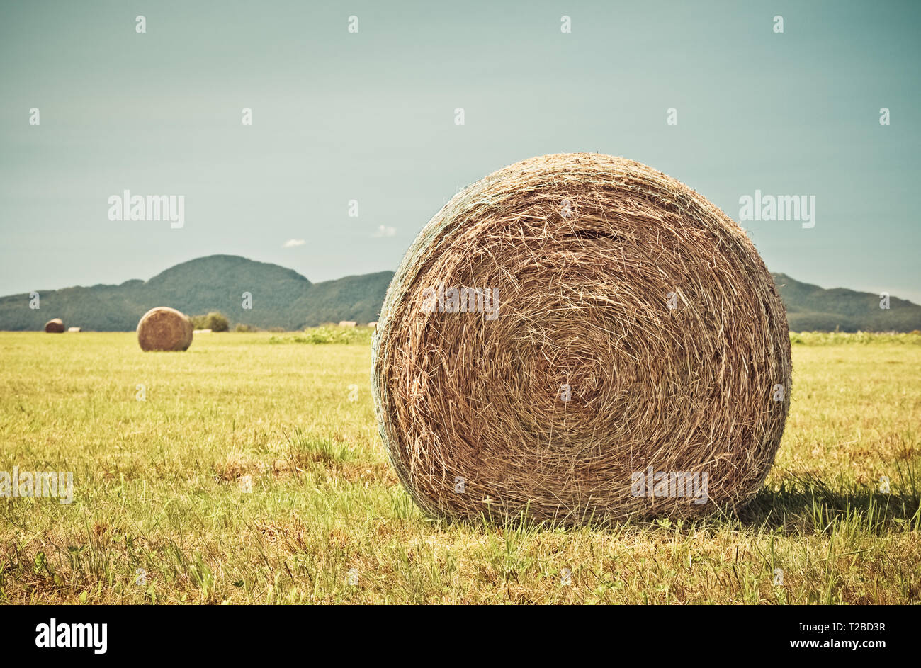 Haystack Roll Stock Photos Haystack Roll Stock Images Alamy