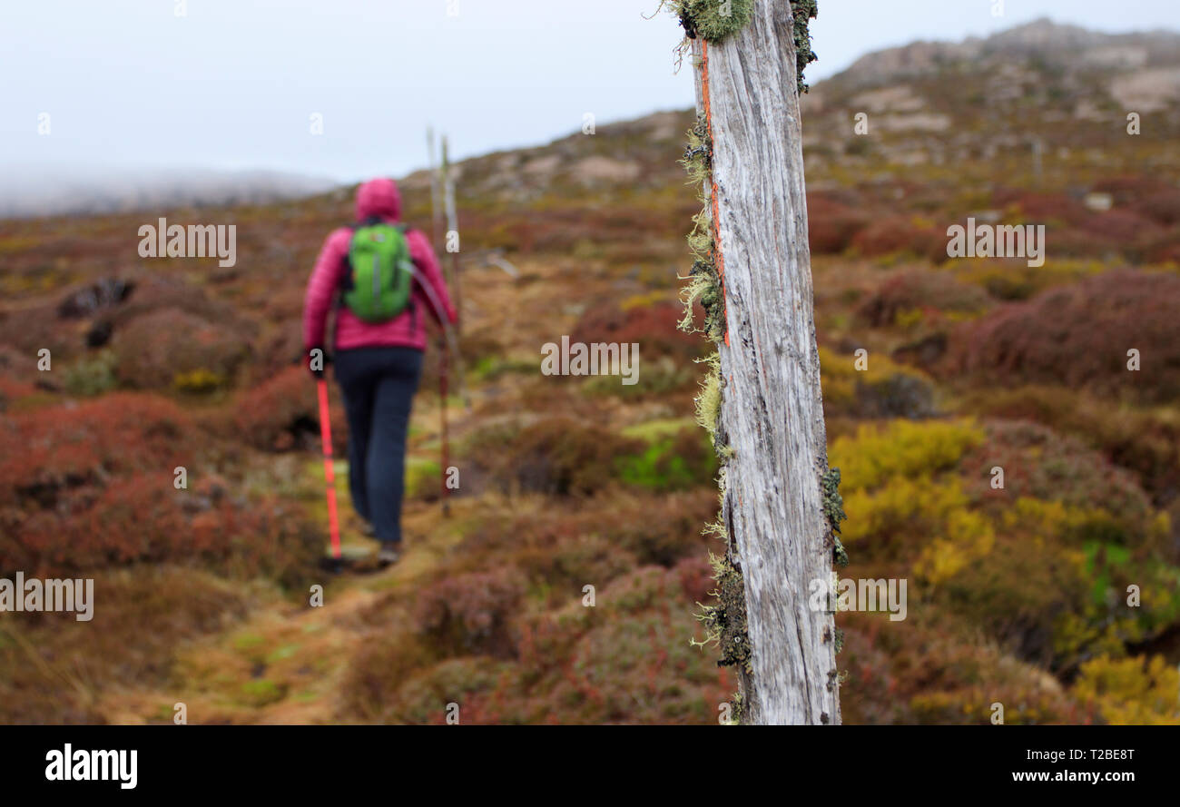 Middle aged woman dressed in cold weather hiking clothes walking on the Little Hell hiking track at Ben Lomond National Park in northern Tasmania.   T - Stock Image