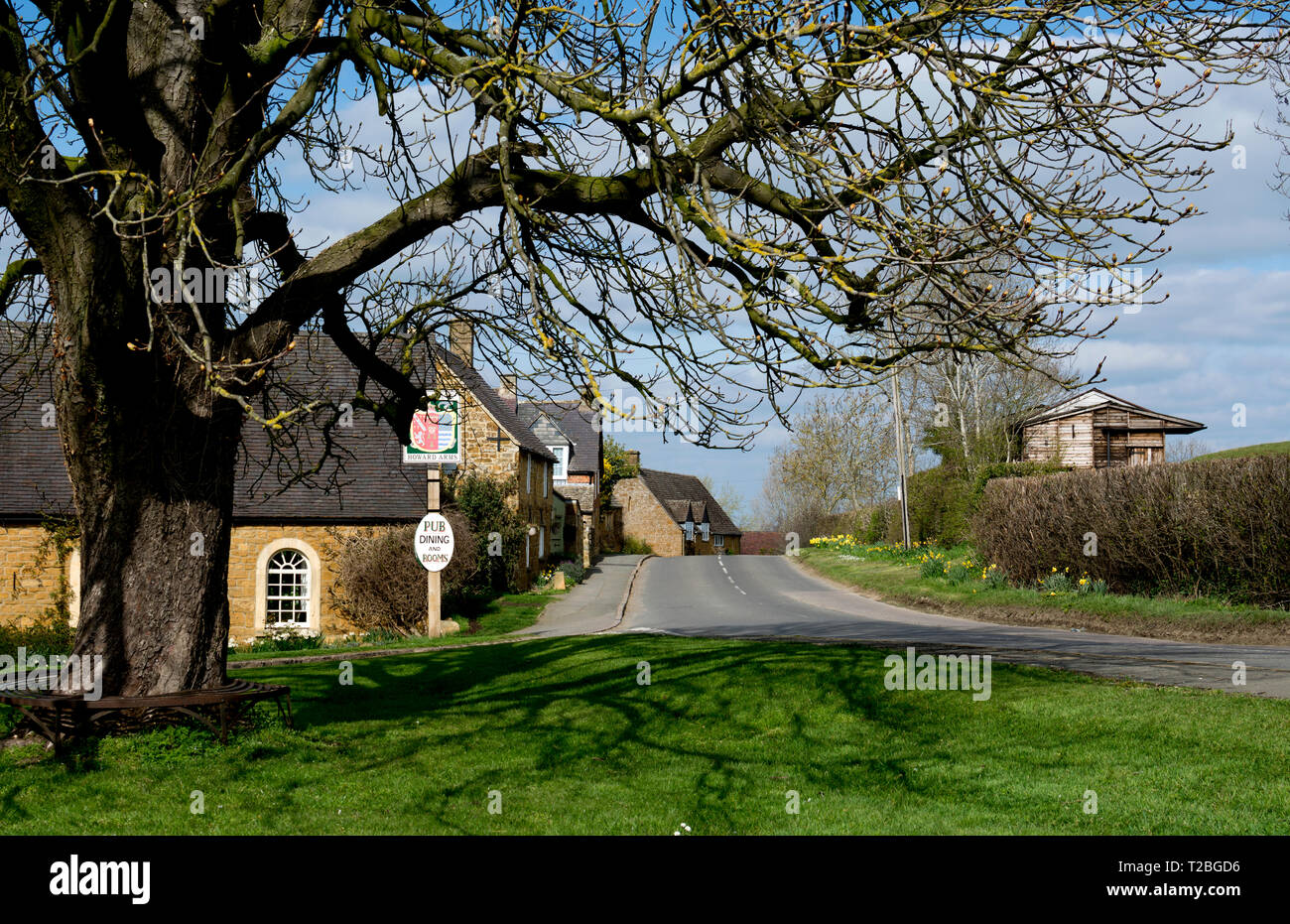 Horse chestnut tree on the village green, Ilmington, Warwickshire, England, UK - Stock Image