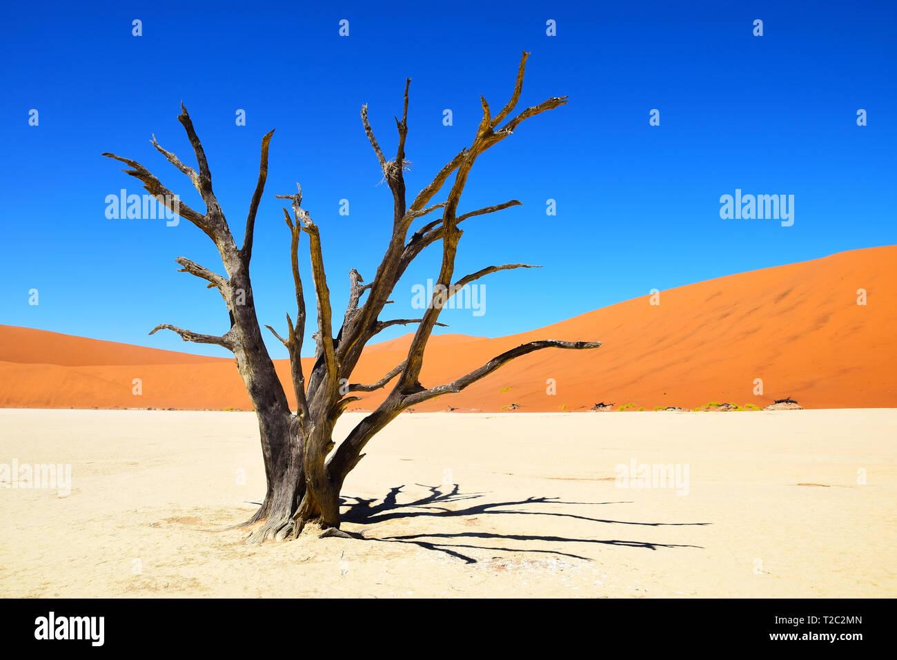 Versteinerter Baum im Deadvlei, Sossusvlei Namibia, Namib Desert - Stock Image