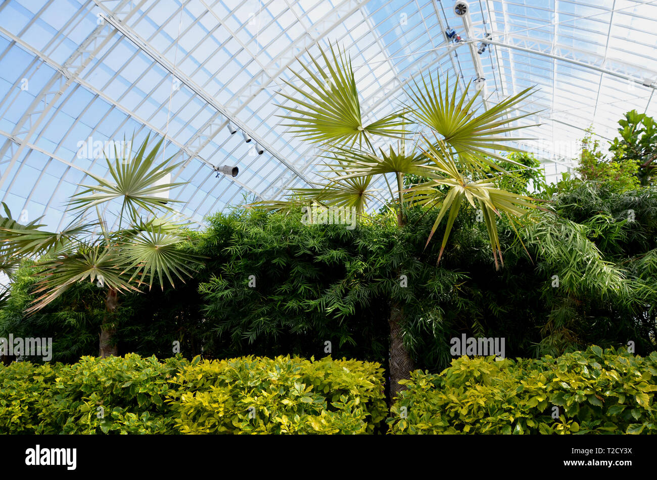 Botanical Garden Palm Trees and bushes Stock Photo