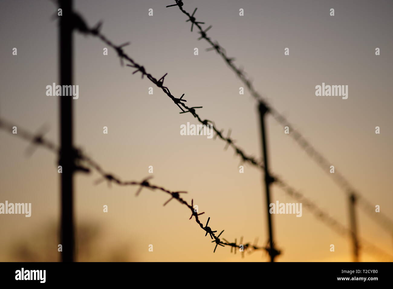barbed wire fence at sunset - Stock Image