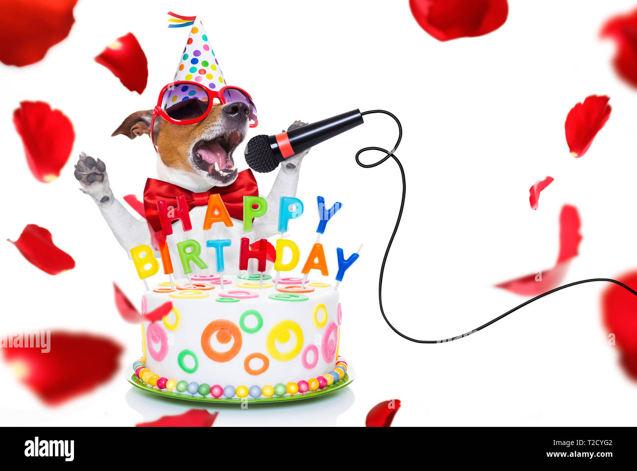 Surprising Jack Russell Dog As A Surprise Singing Birthday Song Like Karaoke Funny Birthday Cards Online Alyptdamsfinfo