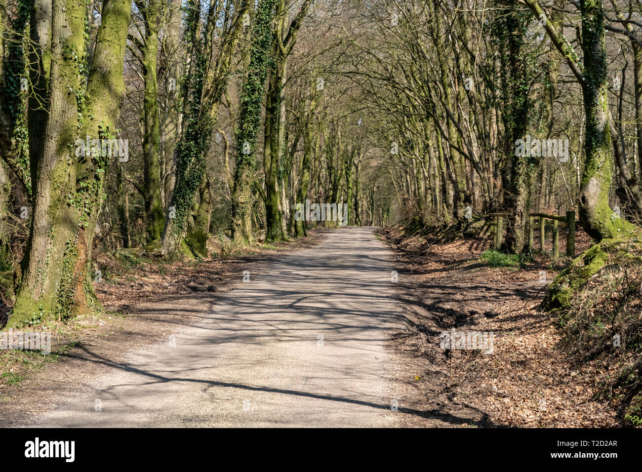 View along the East Hill Strips, near Ottery St Mary, Devon Stock Photo