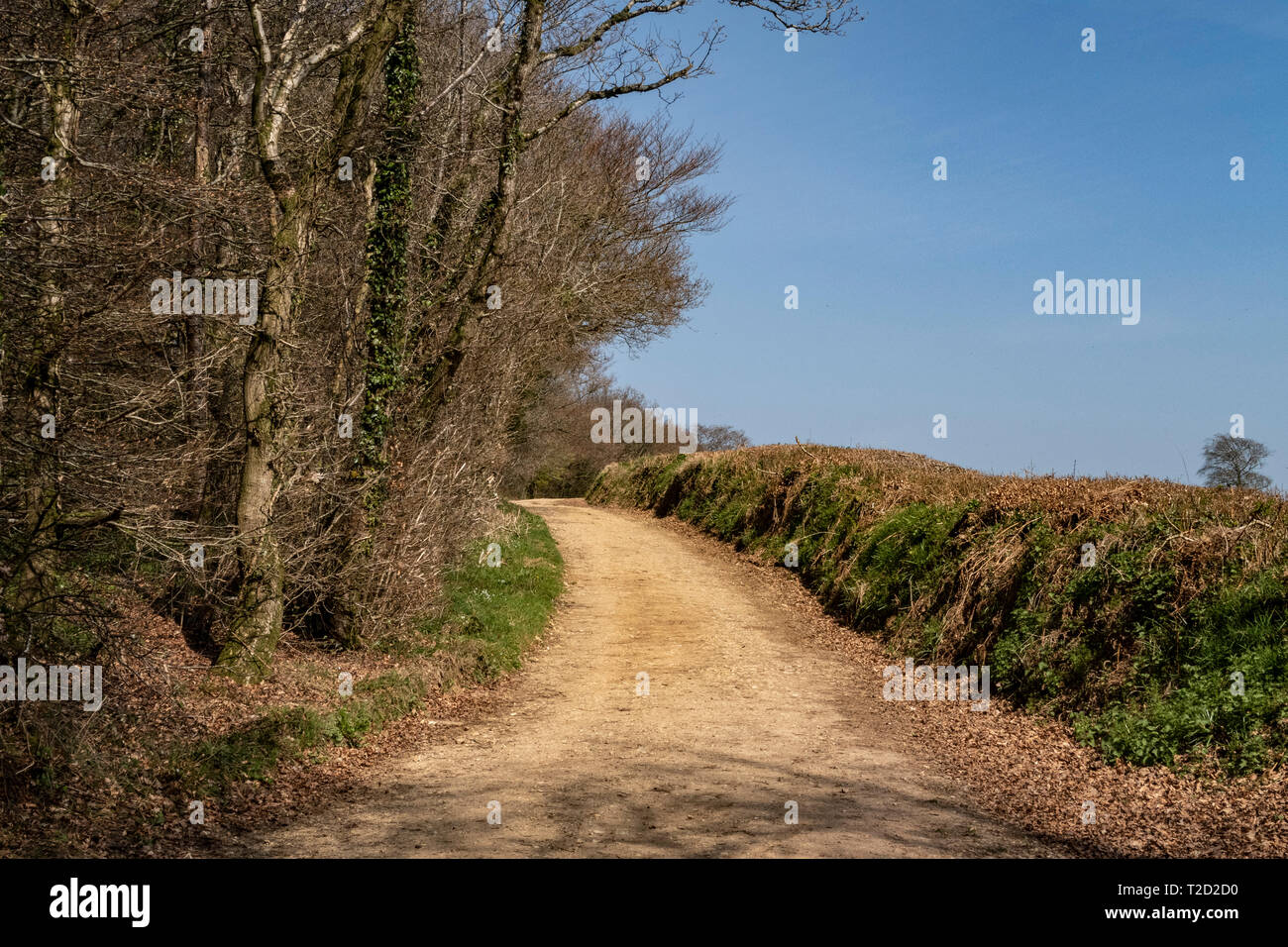 The East Devon Way as it emerges from Core Hill Woods above Sidmouth, Devon. - Stock Image