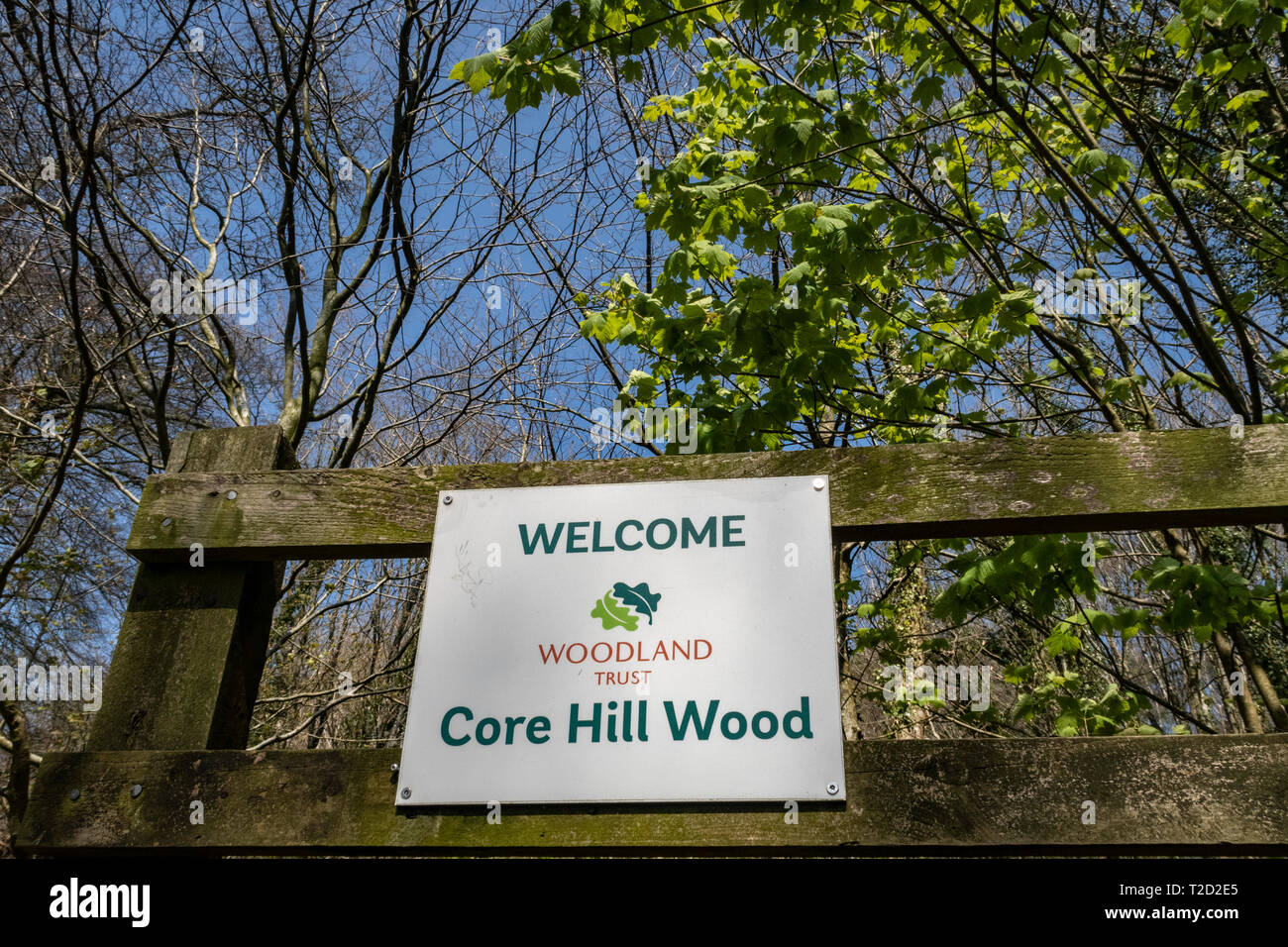 Core Hill Wood, above Sidmouth, Devon, part of the Woodland Trust, with footpaths and good walk walking. - Stock Image