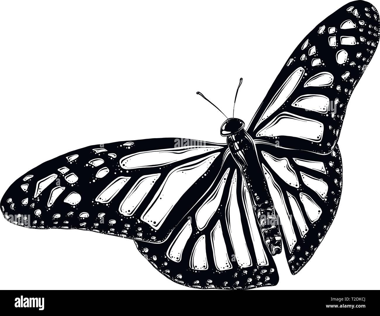 8f6943814 Hand drawn sketch of butterfly in black color. Isolated on white  background. Drawing for posters, decoration and print. Vector illustration.