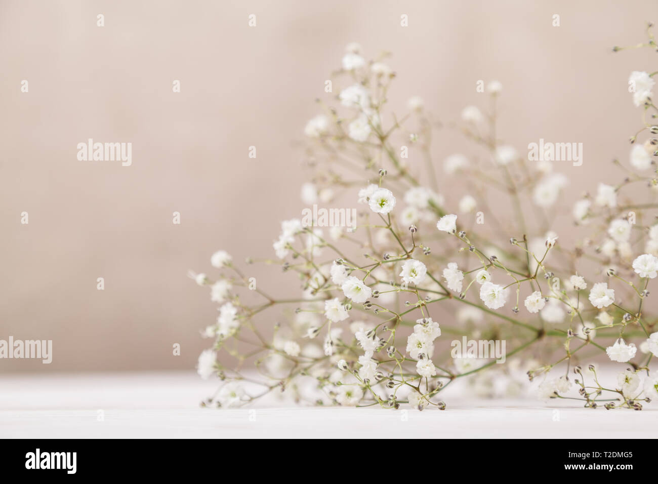 Small white flowers gypsophila on wood table at pale pastel beige background. Minimal lifestyle concept. Copy space. - Stock Image