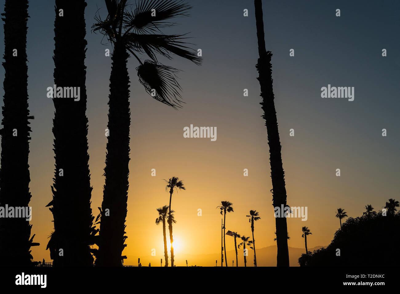 Palm trees lining the Venice Boardwalk in Los Angeles, California. Stock Photo