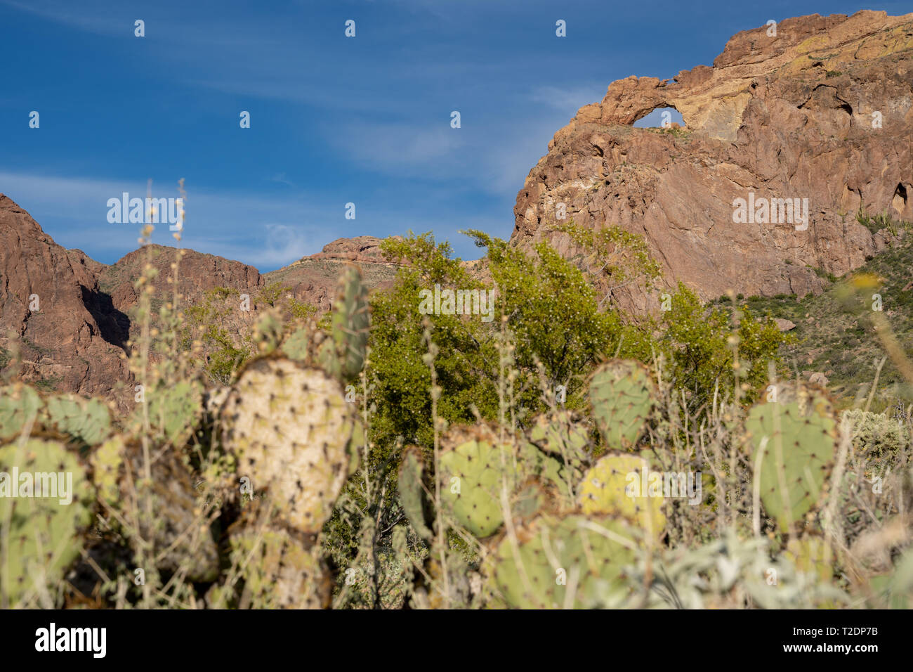 Arch Canyon along Ajo Mountain Drive in Organ Pipe Cactus National Monument in Arizona. Beavertail cactus defocused in foreground - Stock Image