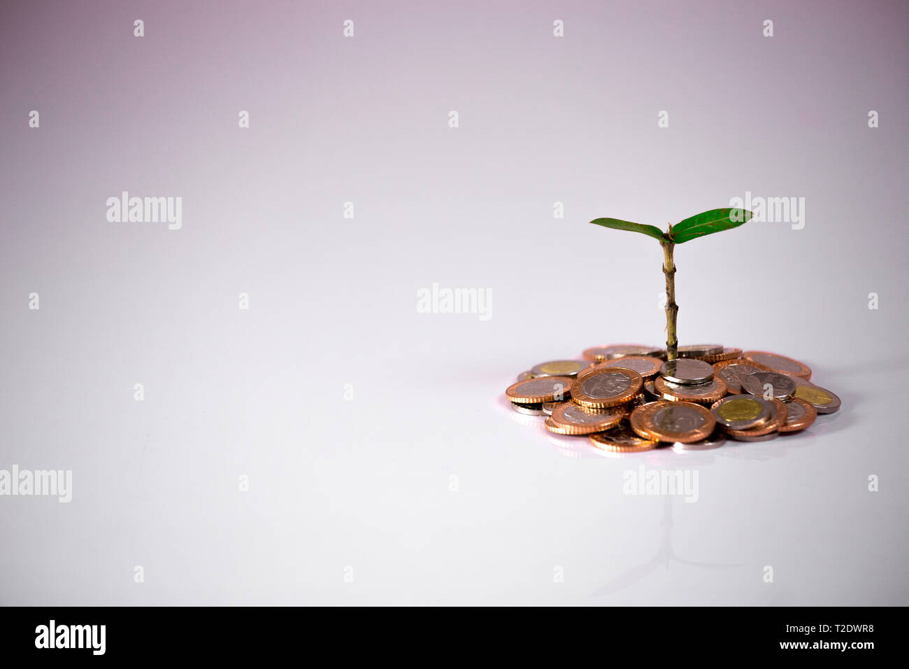 Green plant on coins showing financial growth on white background - Stock Image