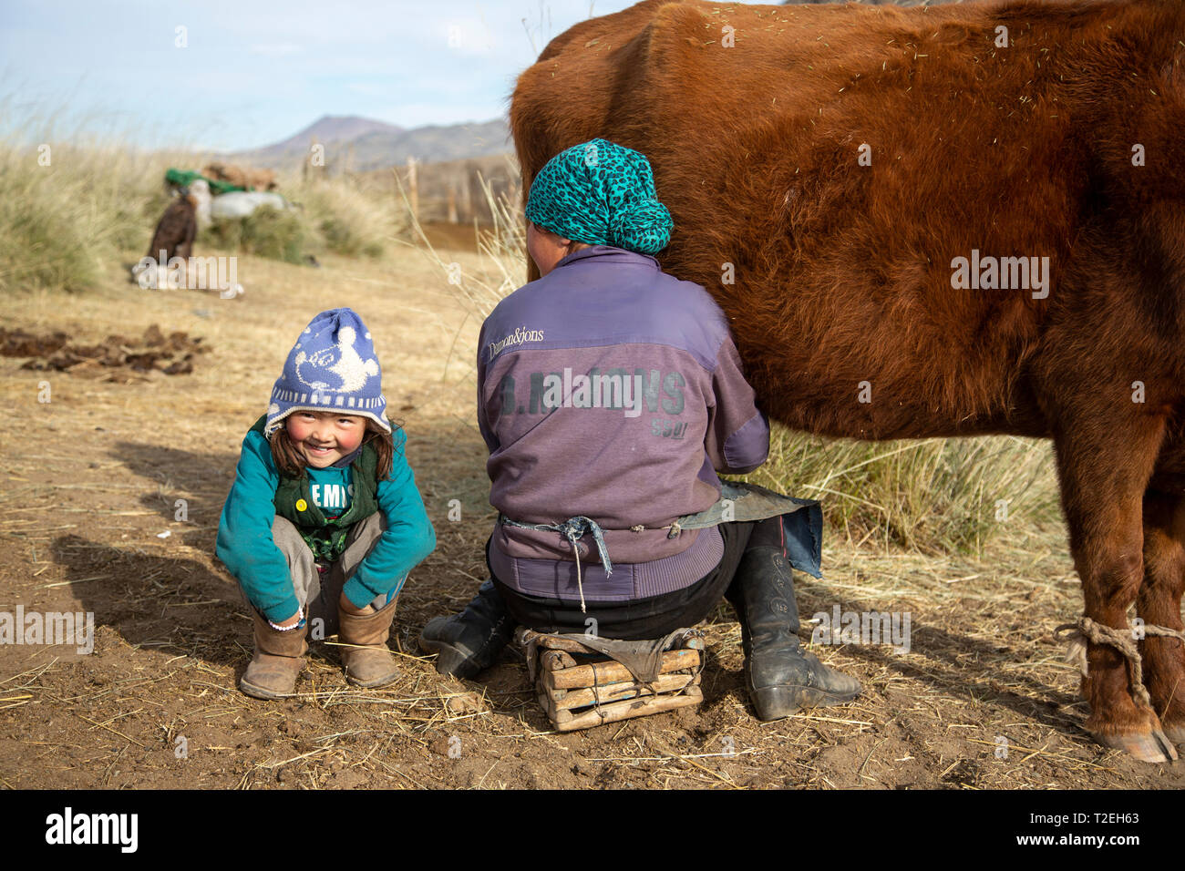 bayan Ulgii, Mongolia, 2nd October 2015: kazak kid with her mother milking the cows Stock Photo