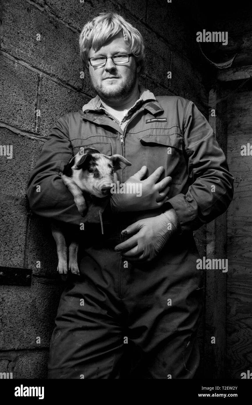 Pig farmer with piglet - Stock Image