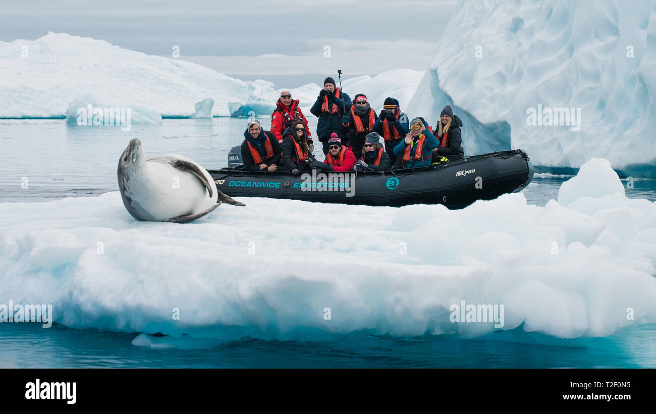 Passengers on board a zodiac in Antarctica enjoy the view of a Weddell Seal on an iceberg while on an expedition to the Polar regions - Stock Image