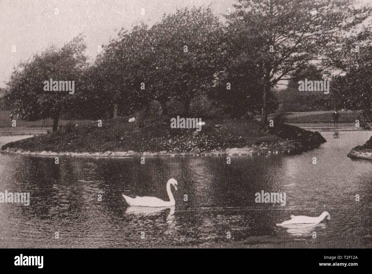 The Pond, Victoria Park, Partick - Stock Image