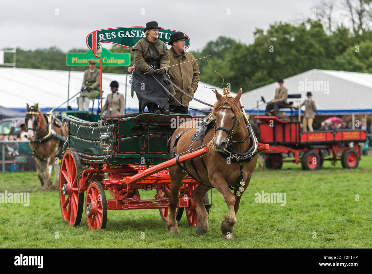 Heavy horse and cart show - Stock Image