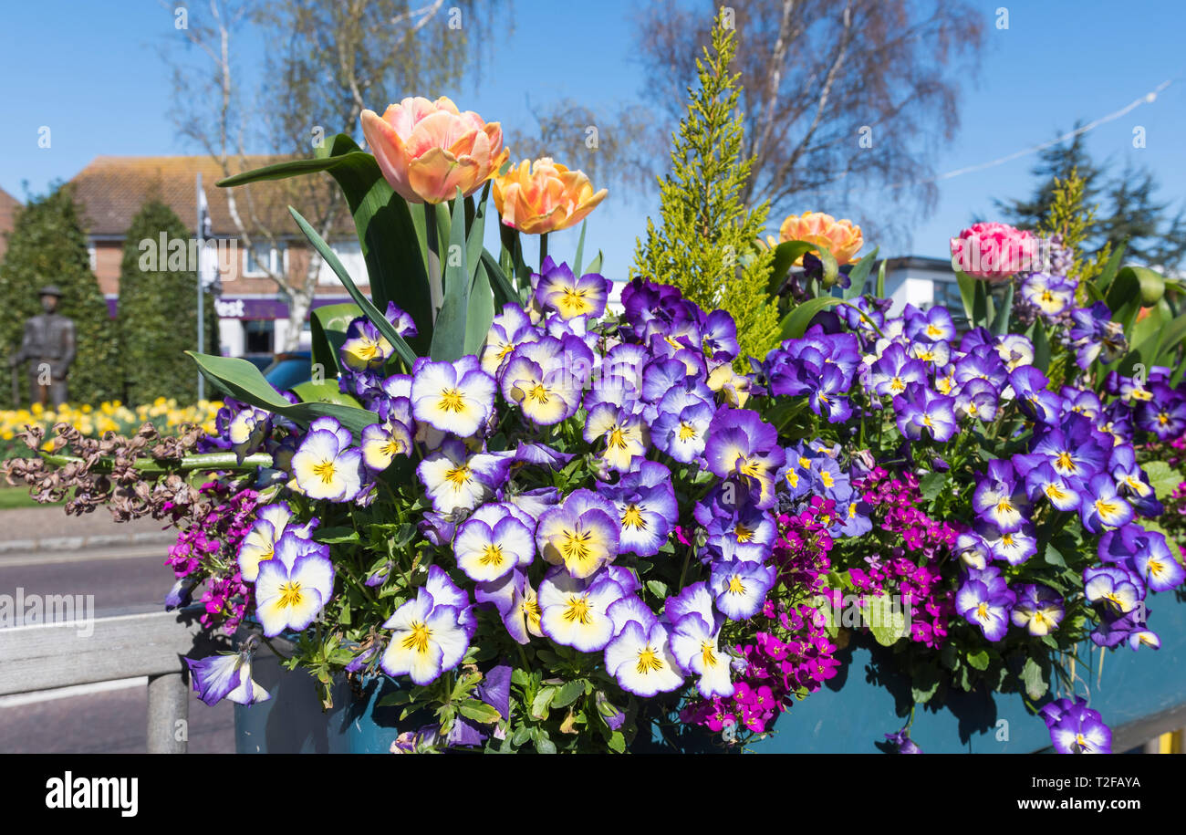 Violas in a Spring flowers display arrangement in a flower box to decorate the High Street in Rustington, West Sussex, UK. Small town floral display. - Stock Image