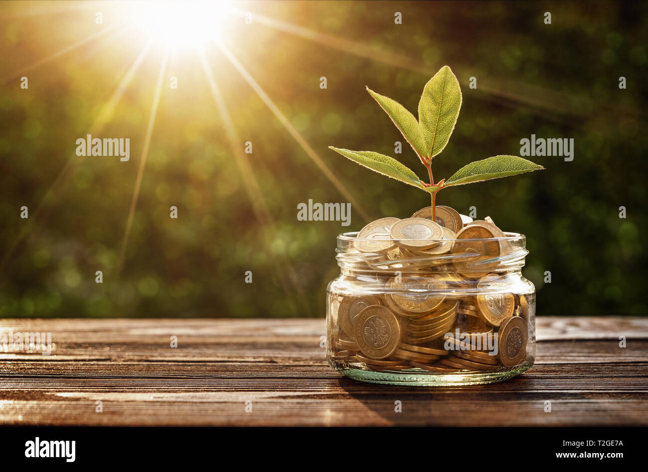 Small plant growing out from jar of saving coins with copy space Stock Photo