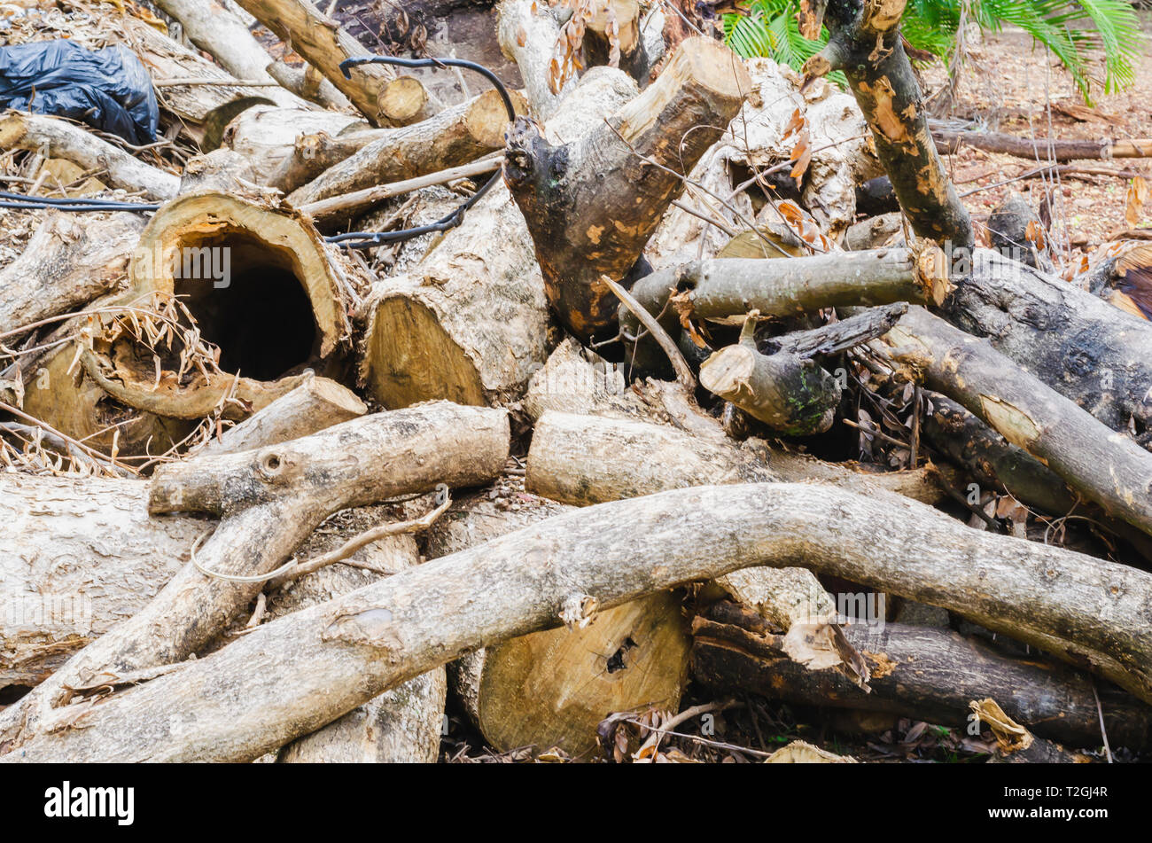tree felled stacked like logs to cultivate and build - Stock Image