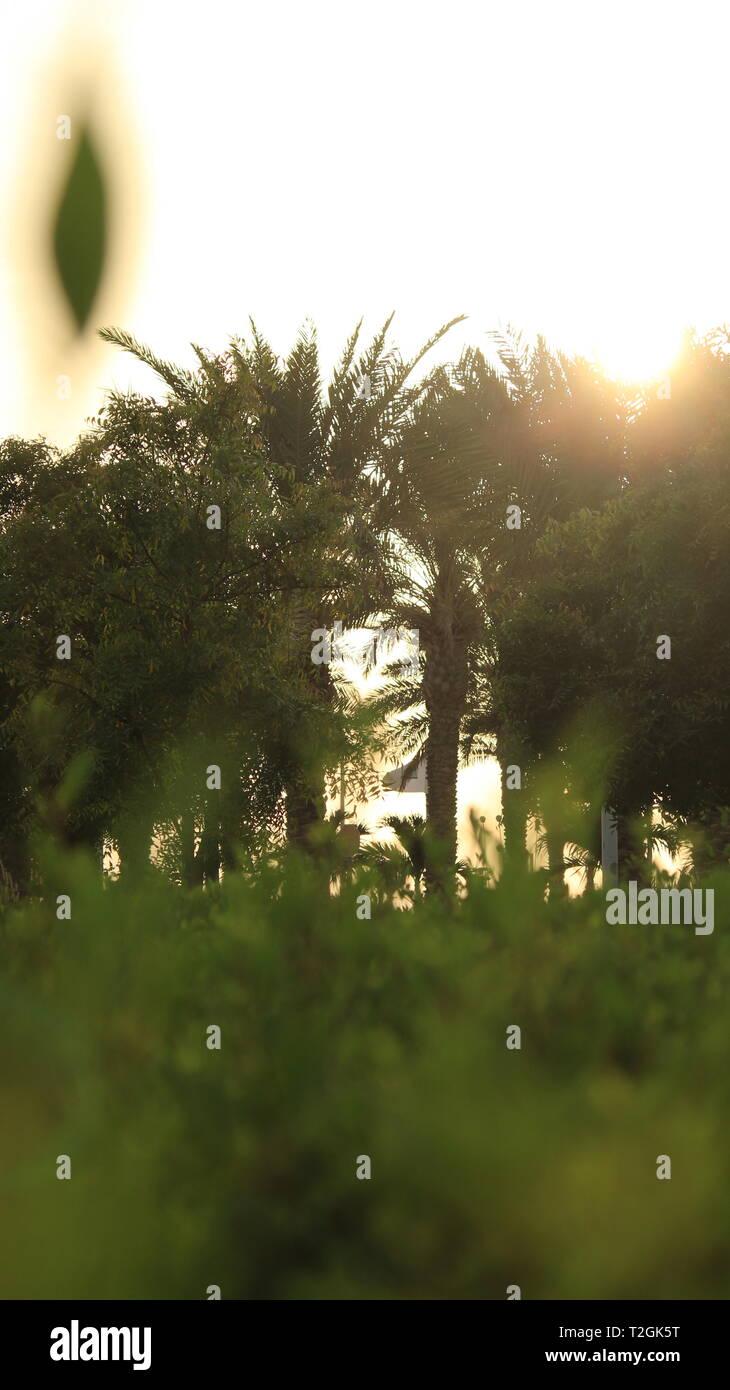 Palm Trees in Public Park in Saudi Arabia - Stock Image