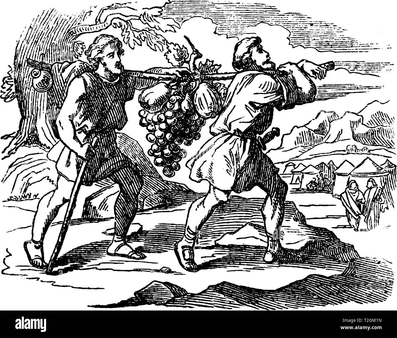 Vintage antique illustration and line drawing or engraving of biblical scouts of Israelites are returning with fruit. Two men carry large bunch of gra - Stock Vector