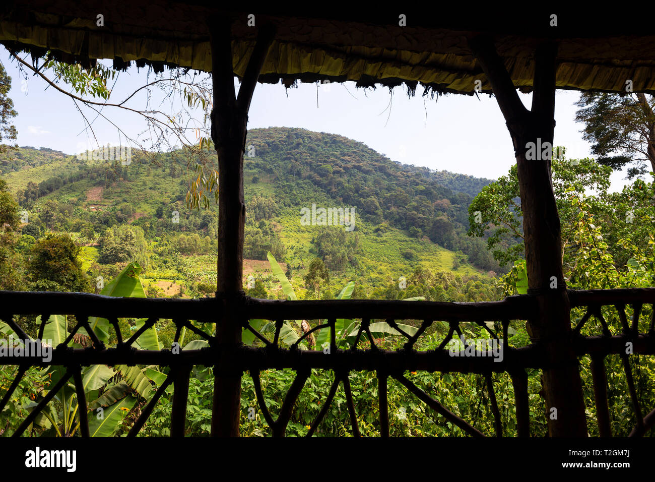 View of rainforest from Honeymoon Suite at Mahogany Springs Safari Lodge near Bwindi Impenetrable Forest National Park, South West Uganda, East Africa Stock Photo