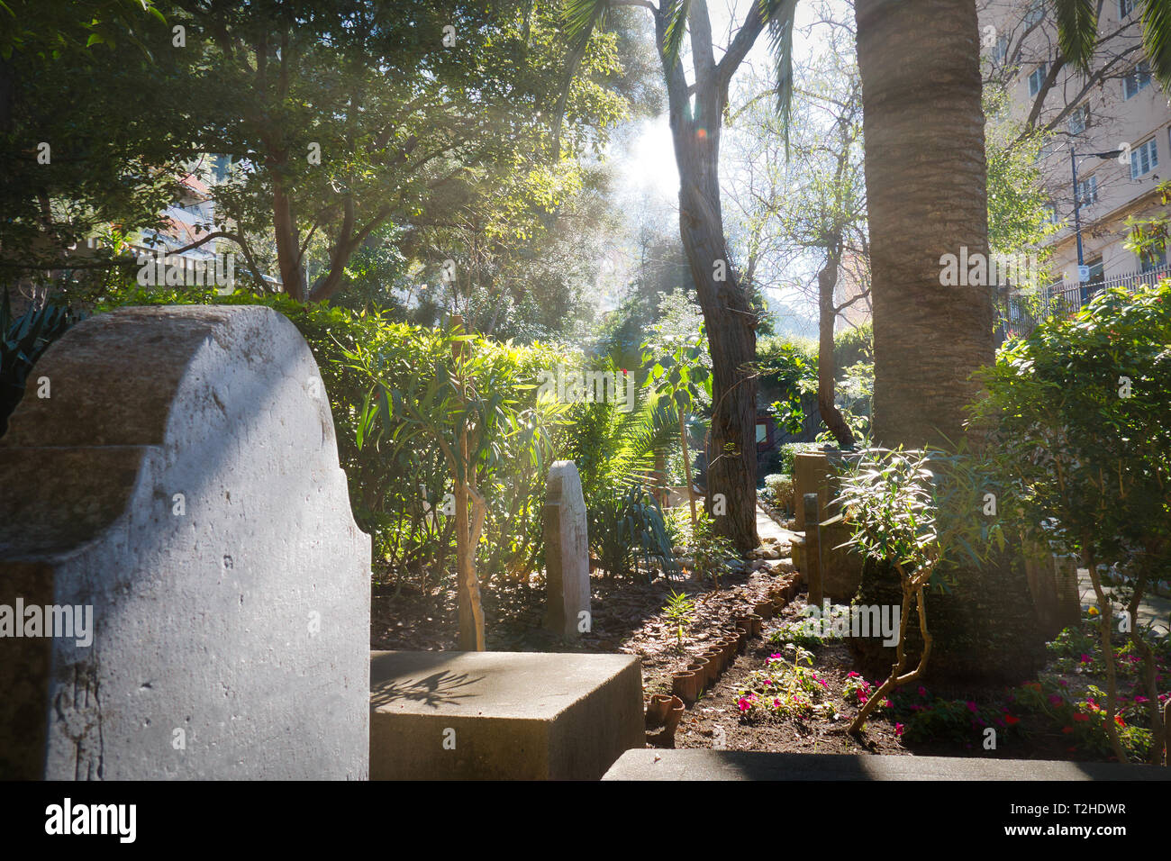 Rays of sunlight among the trees illuminating an ancient tomb in the Trafalgar cemetery, in Gibraltar Stock Photo
