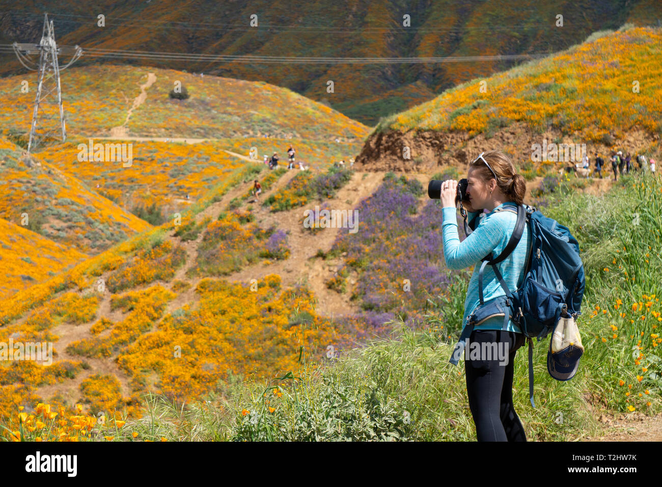 Woman photographer takes photos at Walker Canyon in Lake Elsinore California during the poppy super bloom 2019 - Stock Image