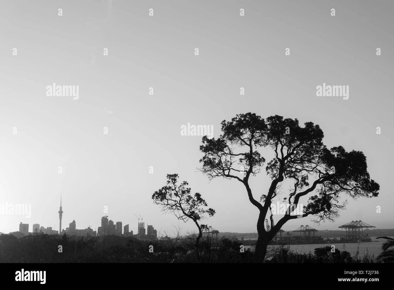 Auckland, New Zealand. View of the central business district at sunset - Stock Image
