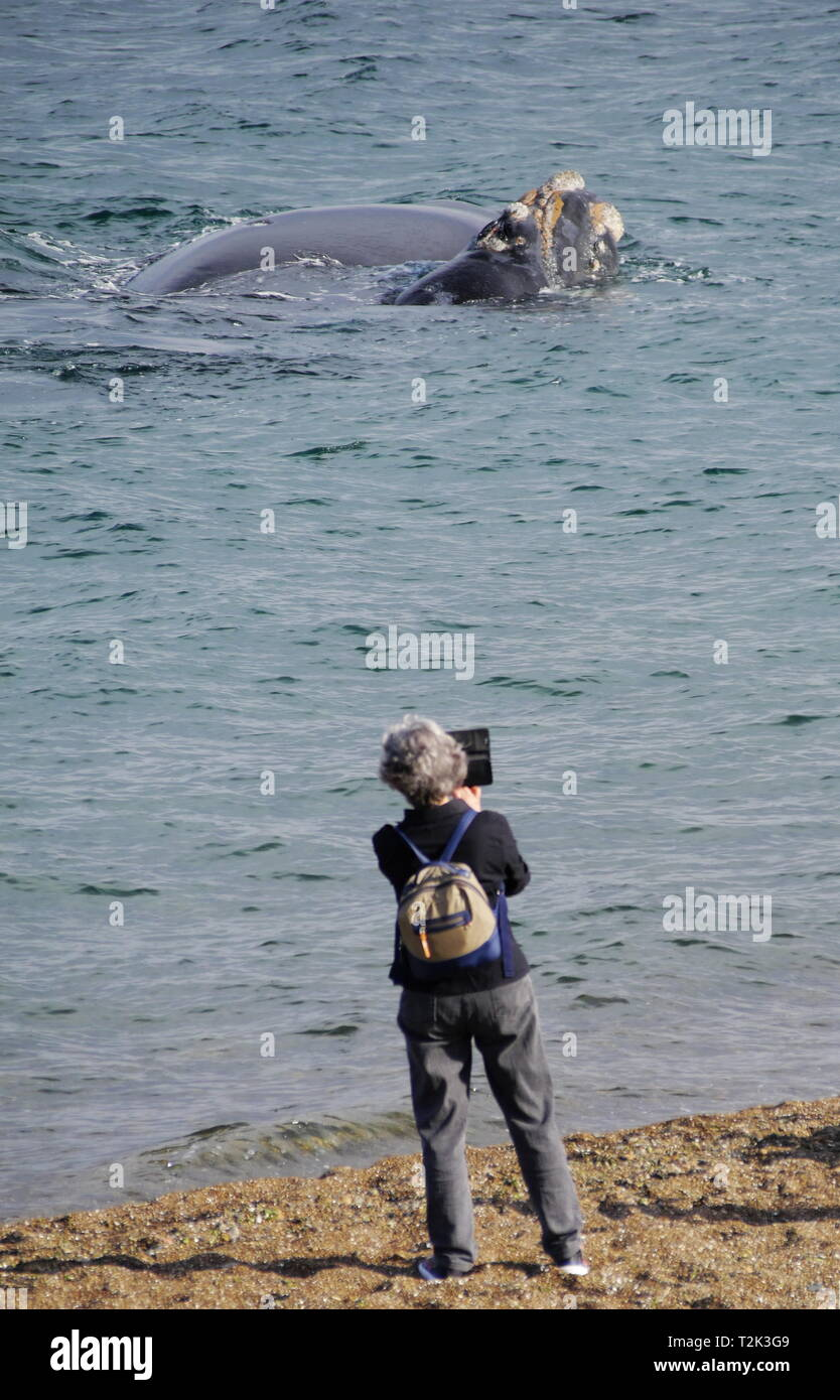 PUERTO MADRYN, AR - CIRCA OCT,2018 - Tourists spend a sunny spring afternoon watching whales near the coast of Playa Las Canteras. Stock Photo
