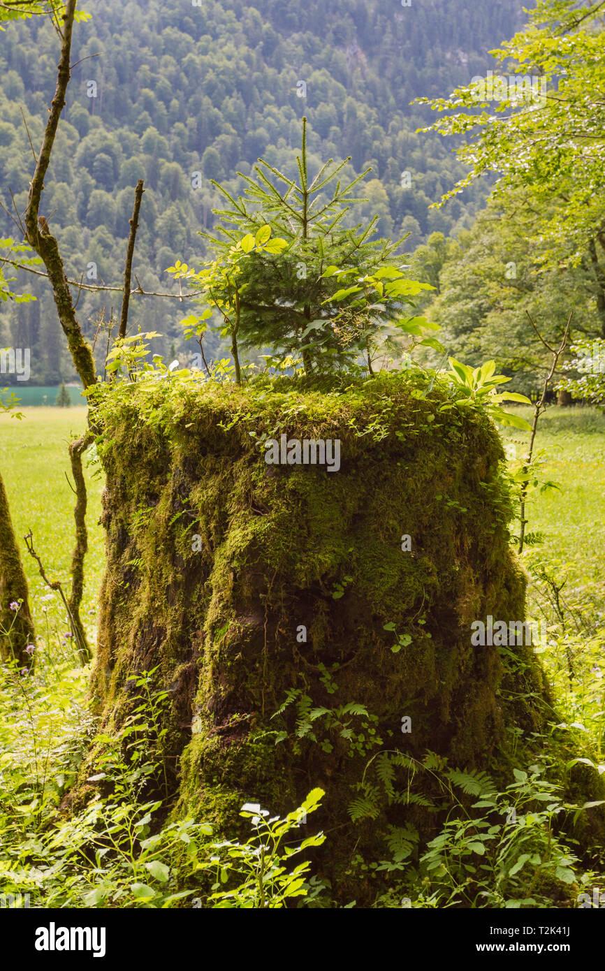 Kleiner Baum - Stock Image