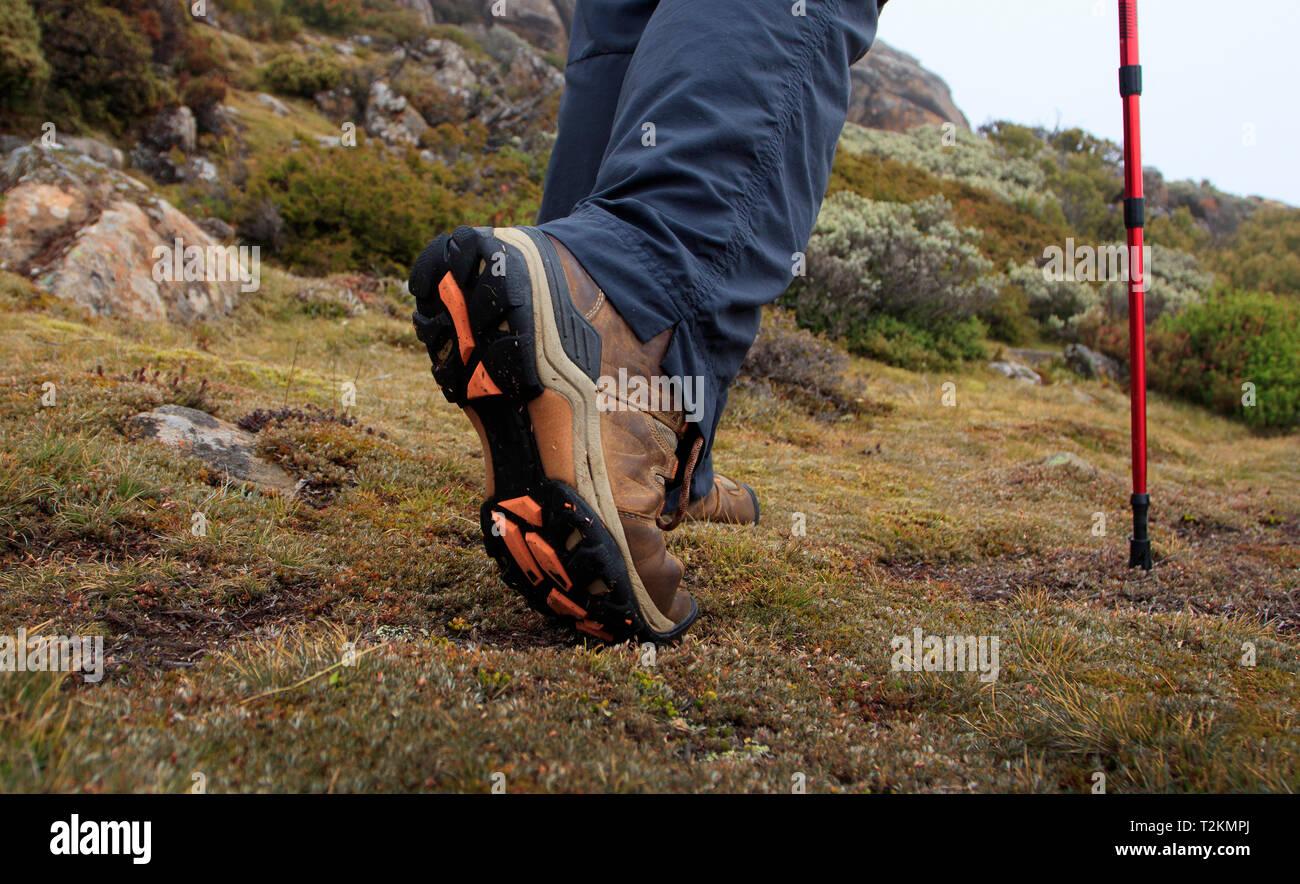 Close up of hiking shoes or boots being worn by a woman with trekking poles bush walking in alpine environment in Tasmania. - Stock Image