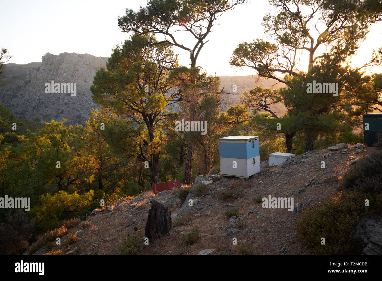 Beehives in the forest near the Chalaris Canyon, Ikaria, Greece - Stock Image