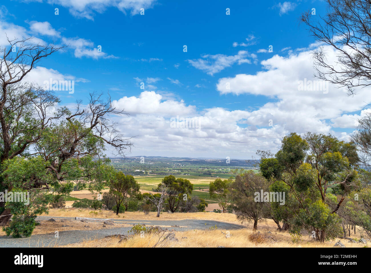 View over the Barossa Valley wine growing region from Mengler Hill Lookout, Bethany, South Australia, Australia - Stock Image