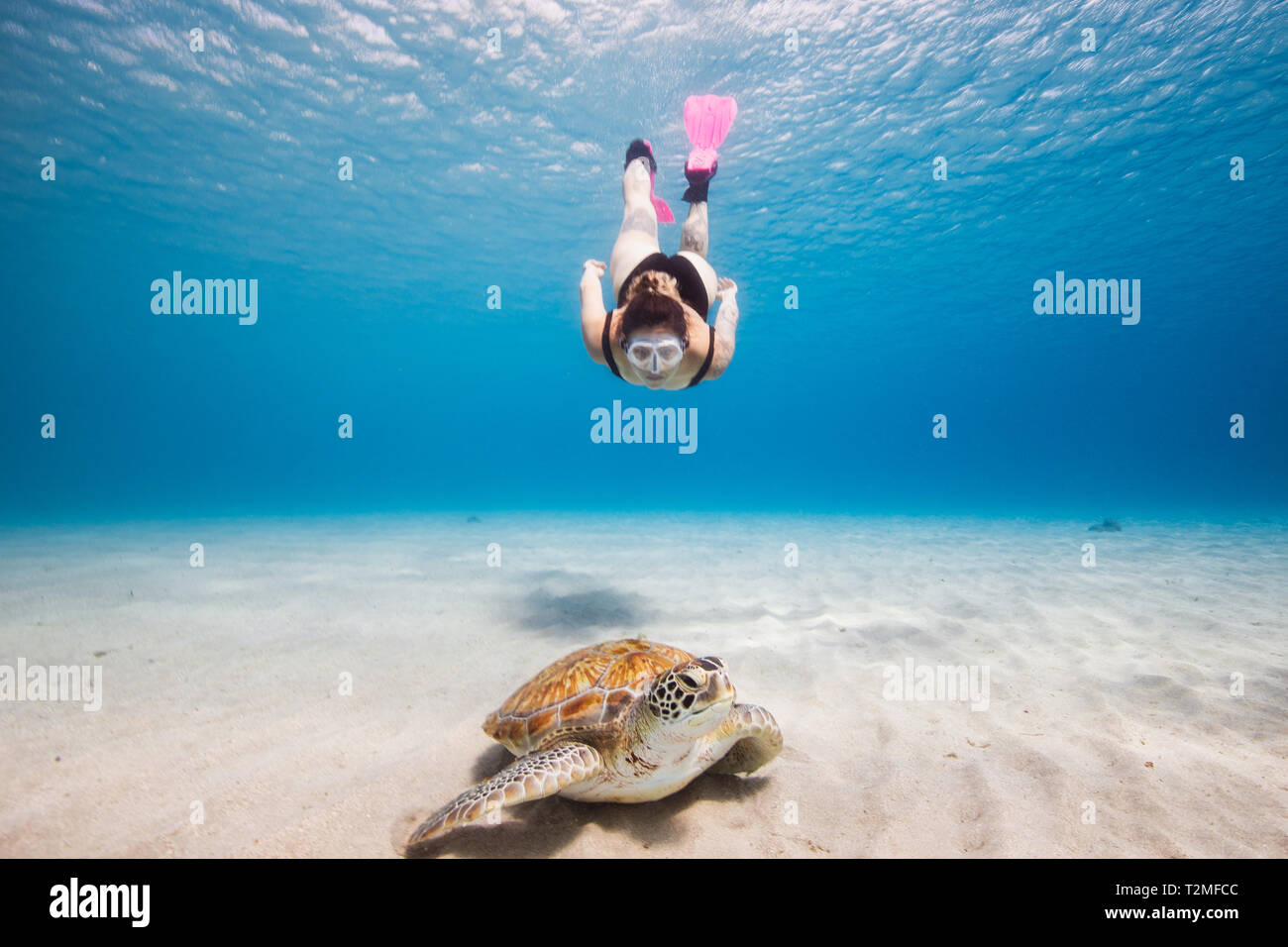 Woman swimming towards green sea turtle, Curacao - Stock Image