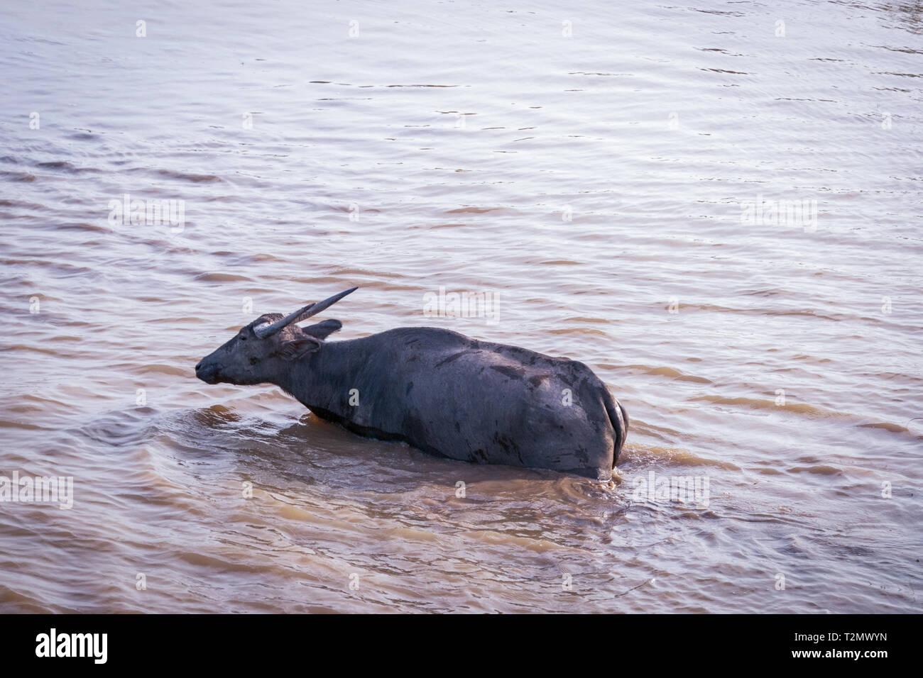 Thailand Lake Stock Photos & Thailand Lake Stock Images