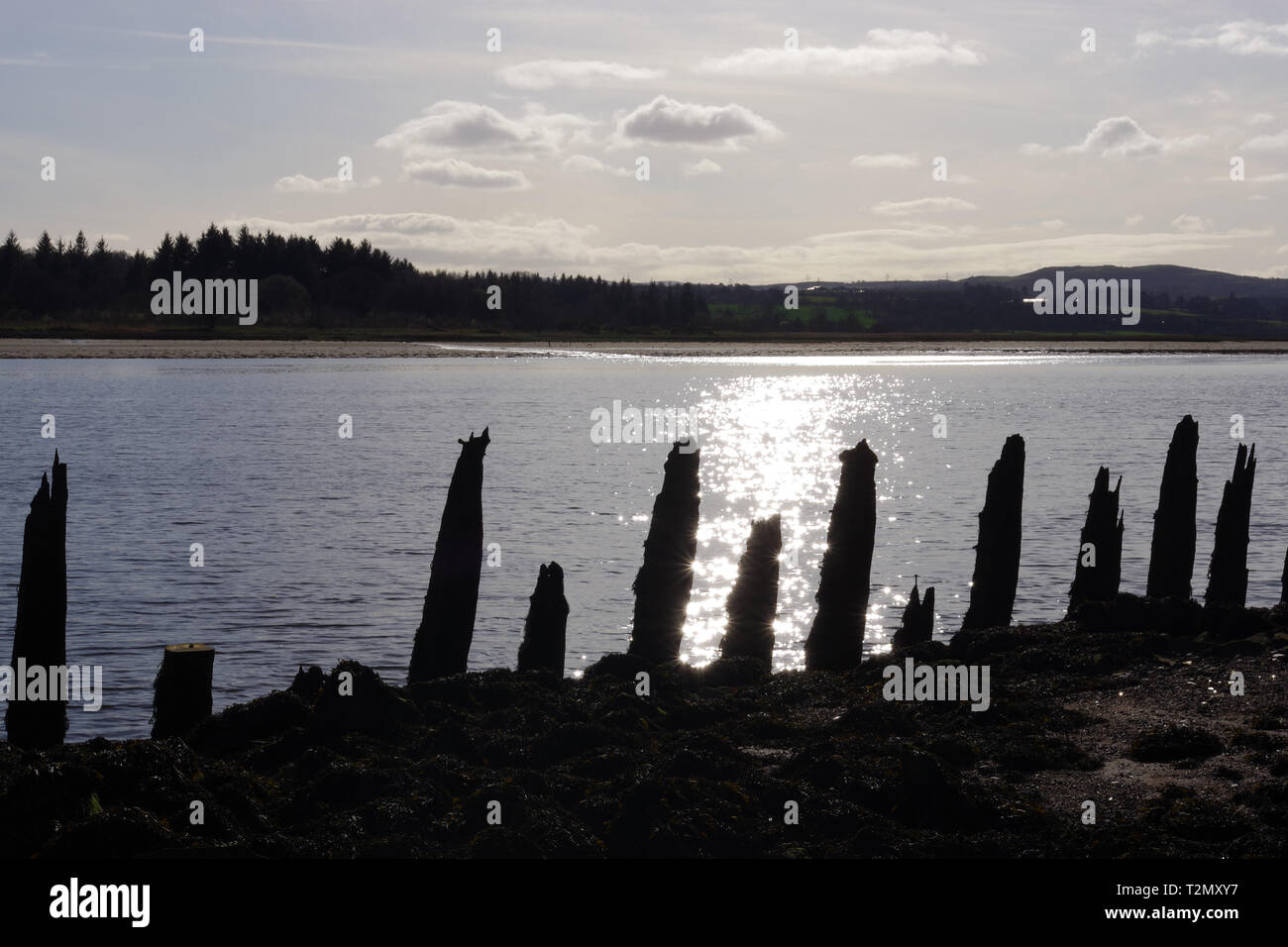 On Bowling harbour Beach, sun shining on the river Clyde, rotting timbers sticking up from the water. - Stock Image