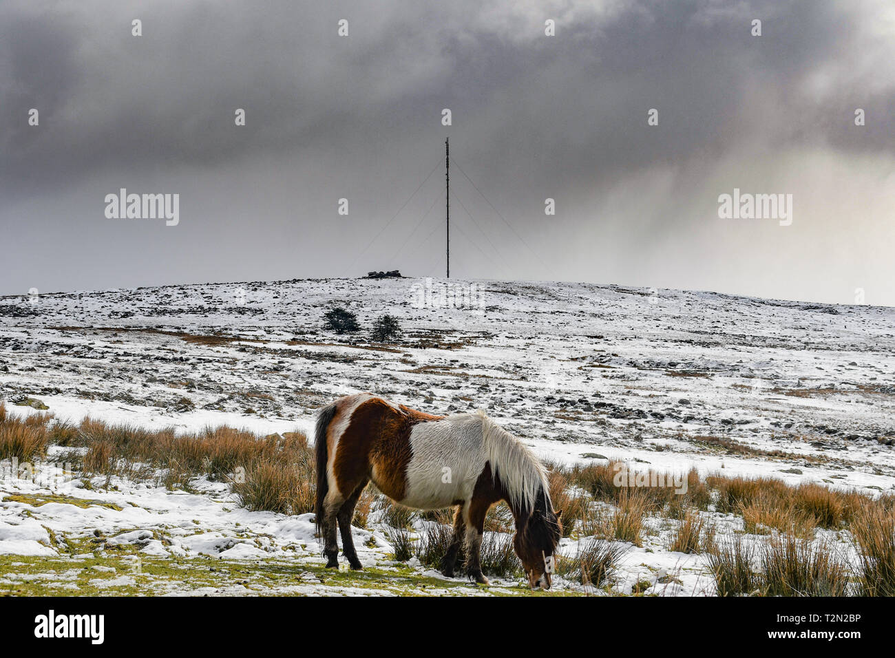 Princetown, Dartmoor, Devon, UK. 3rd April 2019. UK Weather. Snow still lying on the hills ofr Dartmoor this morning. Credit: Simon Maycock/Alamy Live News Stock Photo