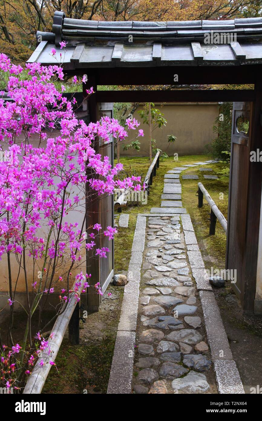 Kyoto, Japan - pink blooming tree at famous Daitokuji (Daitoku-ji) Temple. Buddhist zen temple of Rinzai school. - Stock Image