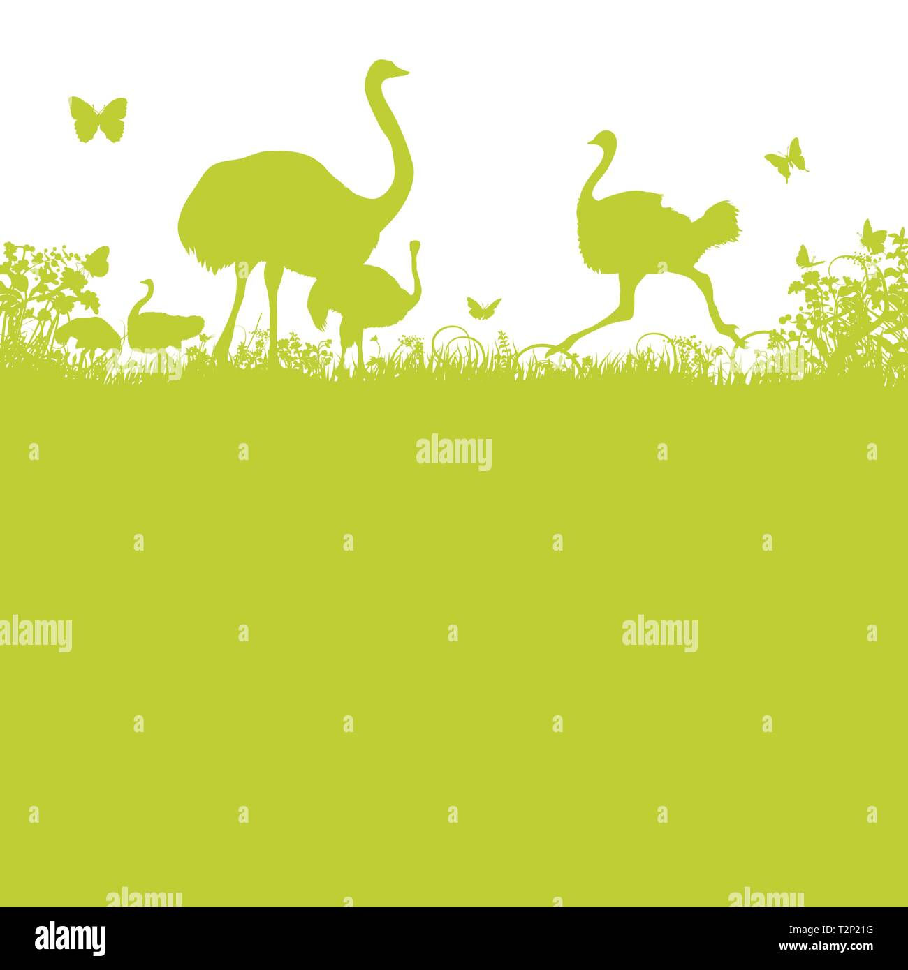 Ostrich and ostrich herd in the savannah - Stock Vector