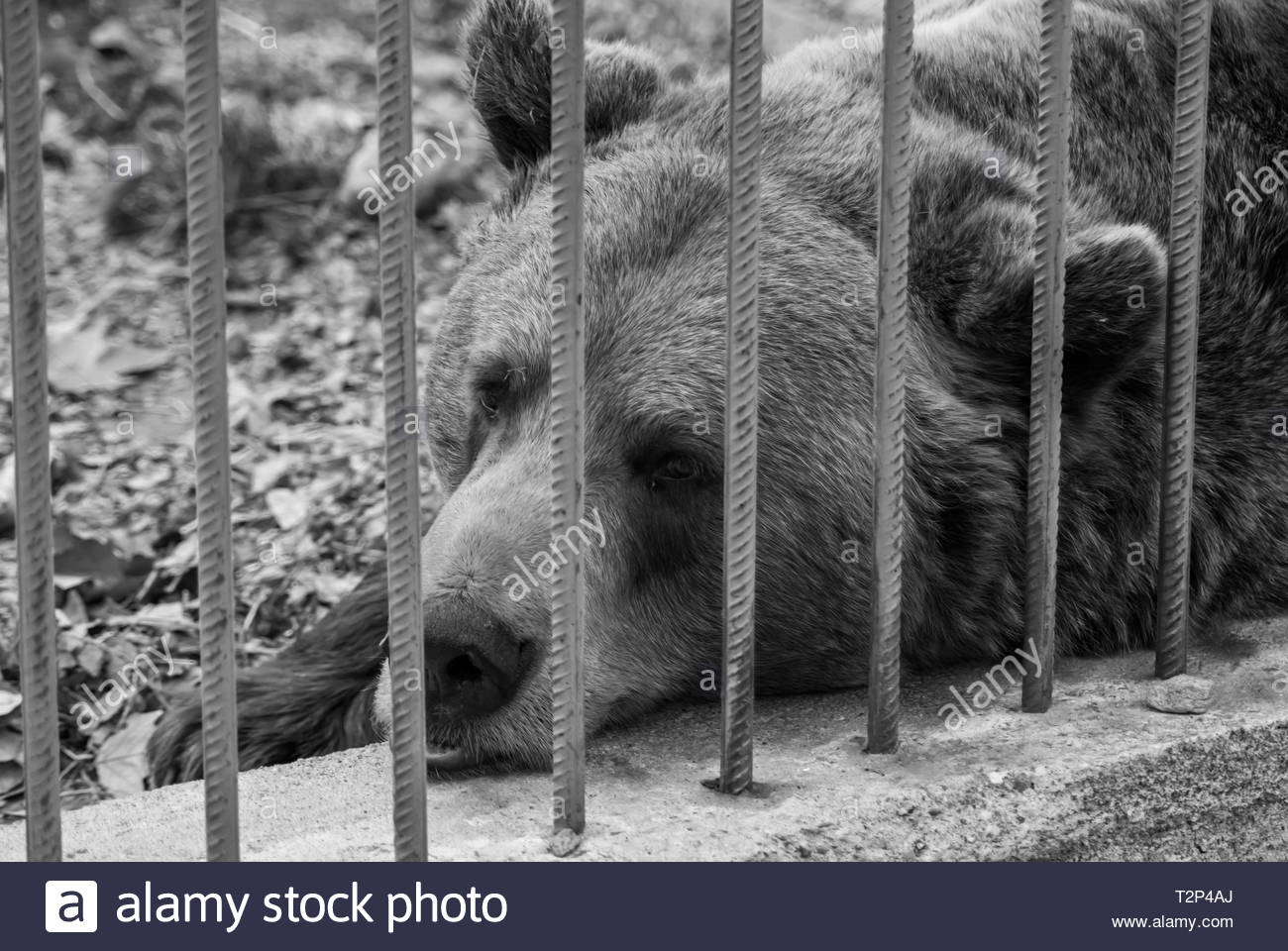 Animal Rights Black and White Stock Photos & Images - Alamy