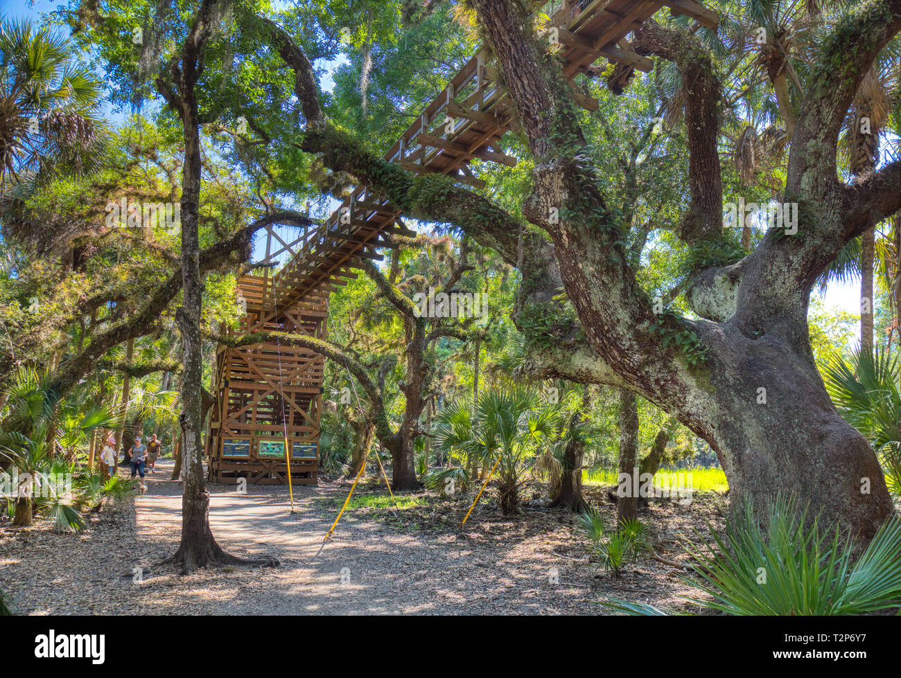 Canopy Walk suspension bridge tourist attraction in Myakka River State Park in Sarasota Florida, tree, trees Stock Photo
