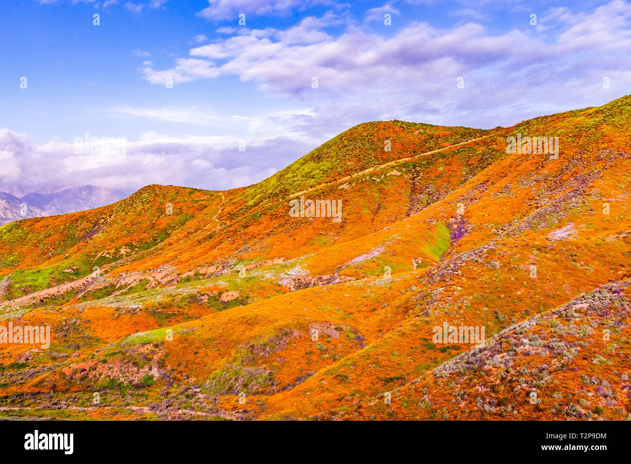 Landscape in Walker Canyon during the superbloom, California poppies covering the mountain valleys and ridges, Lake Elsinore, south California - Stock Image