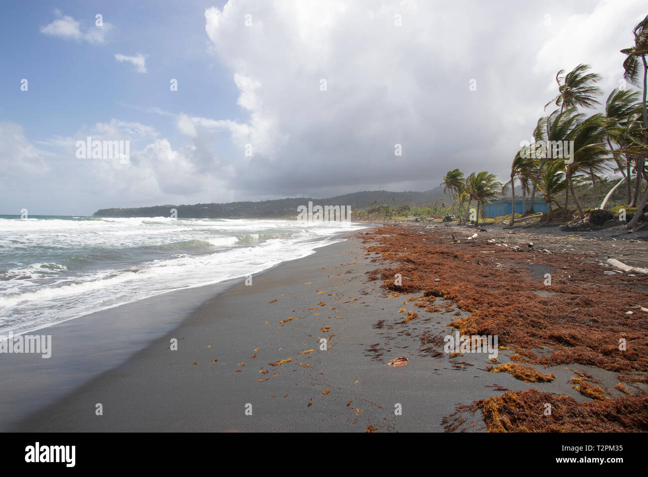 Coastal beach, Londonderry, Dominica, Caribbean - Stock Image
