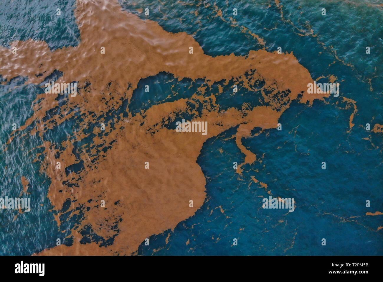 Sargassum Stock Photos & Sargassum Stock Images - Alamy