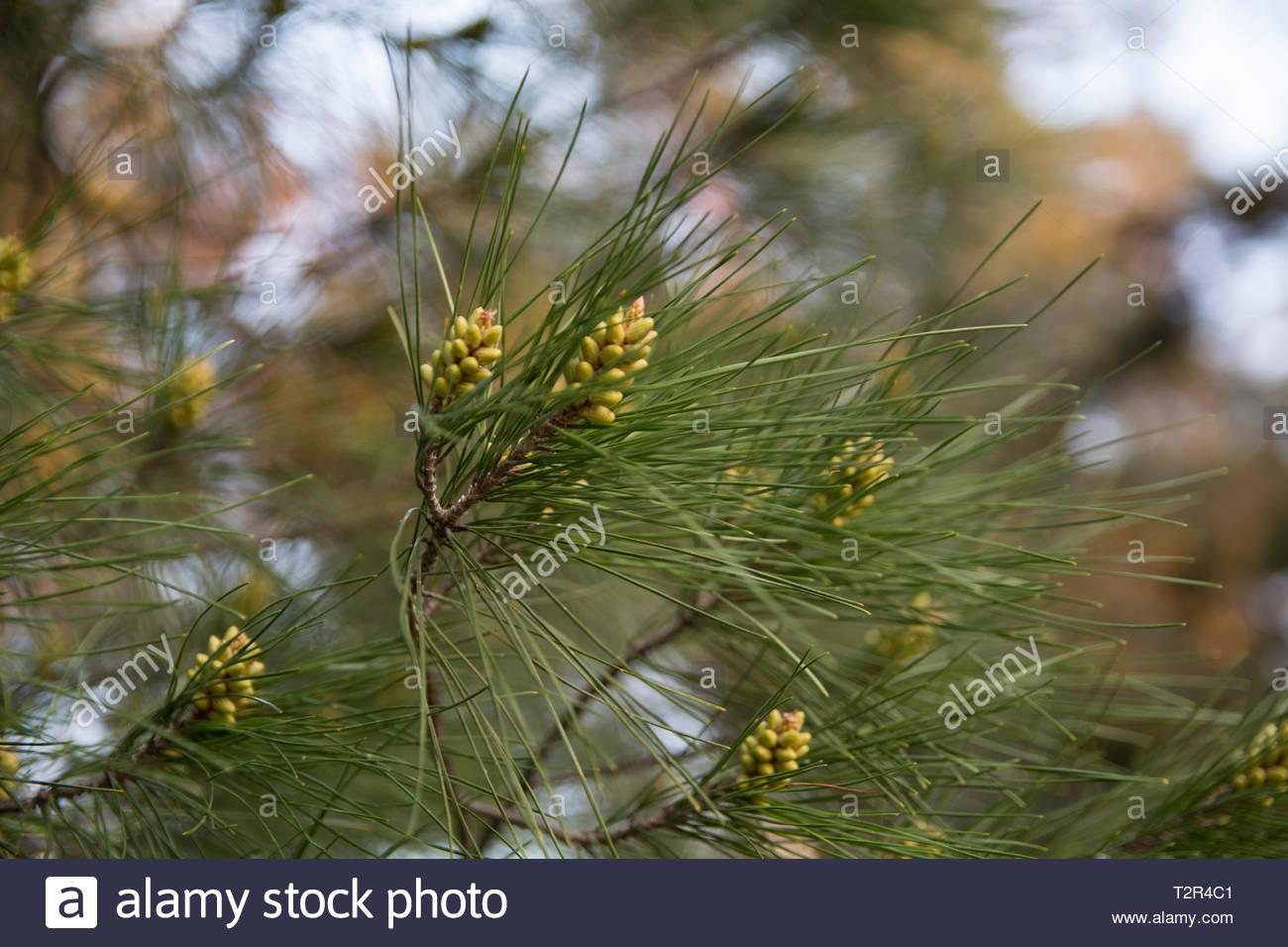 Spring Tree Nature. Greece 2019 - Stock Image