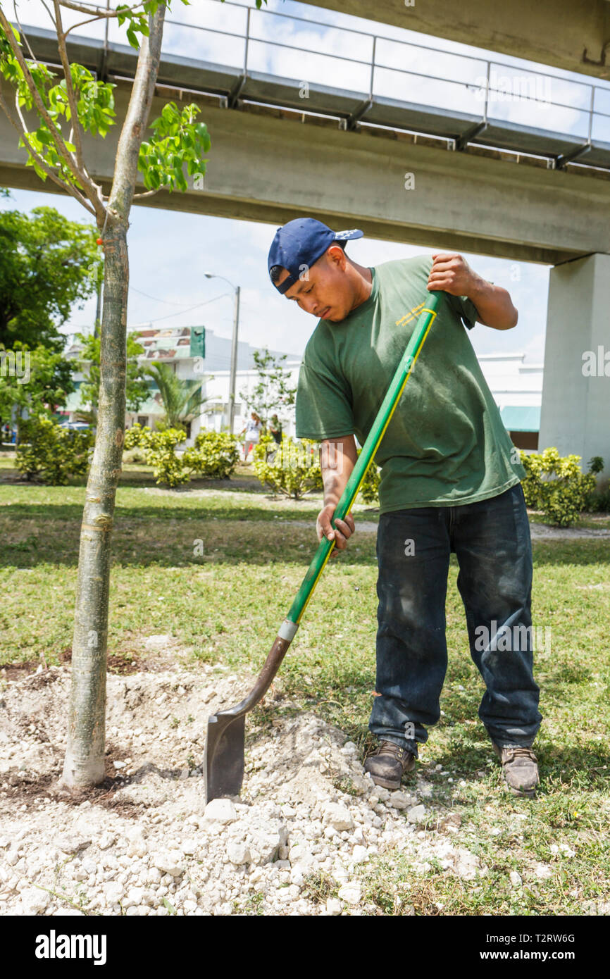 Miami Florida Overtown Peace Park Global Youth Service Day tree planting community service volunteer student Black man planting - Stock Image